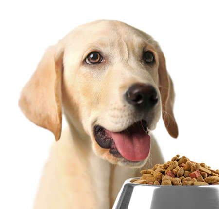 hungry: Hungry dog with bowl of tasty food, isolated on white
