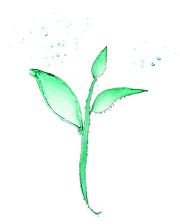 made of water: Small plant made of water splashes isolated on white Stock Photo