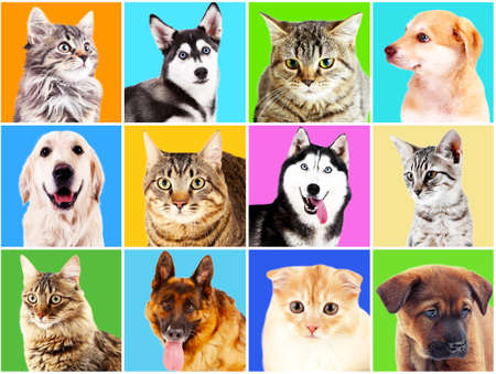 cute dogs: Dogs and cats portraits on bright backgrounds
