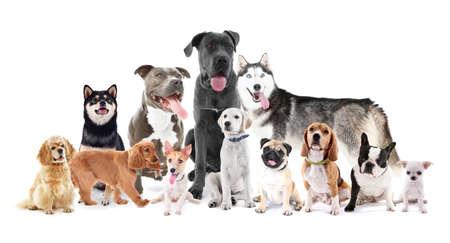 Grupo de perros de razas diferentes que se sienta delante, aislado en blanco