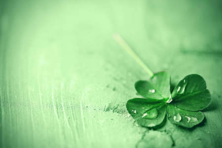 lucky charm: St. Patricks day,  clover leaf on green wooden background