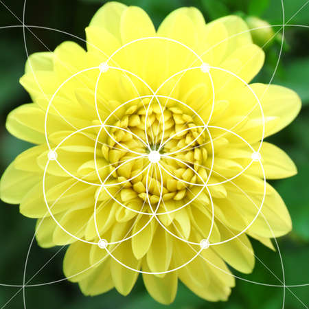 illustration of spiral arrangement in nature fibonacci pattern