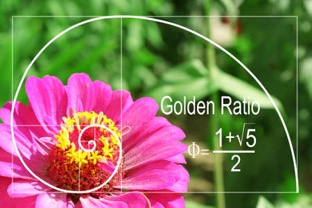 sequences: Illustration of golden ratio in nature. Fibonacci pattern Stock Photo