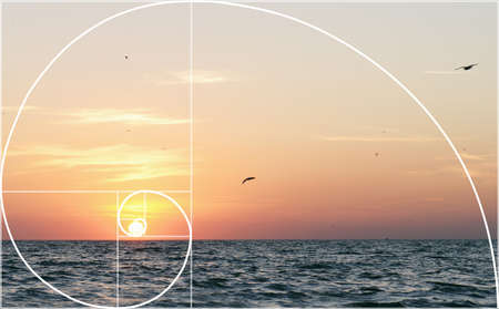 Illustration of spiral arrangement in nature. Fibonacci pattern Stock Illustration - 57509906