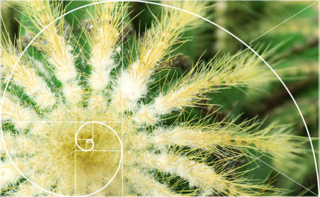 golden ratio: Illustration of spiral arrangement in nature. Fibonacci pattern