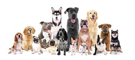 Groep van verschillende rassen honden zitten voor, geïsoleerd op wit Stockfoto