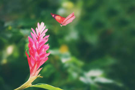 butterfly flying: Butterfly flying among flowers