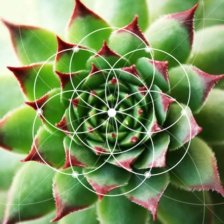 Illustration of spiral arrangement in nature. Fibonacci pattern