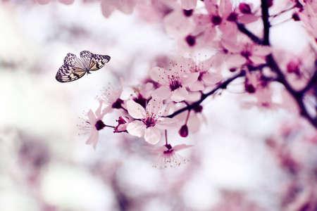 butterfly flying: Beautiful butterfly flying in spring garden
