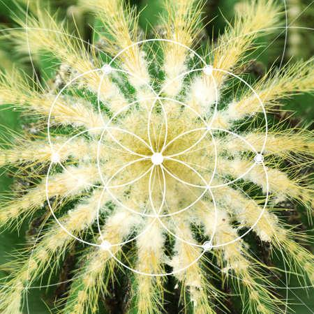 fibonacci: Illustration of spiral arrangement in nature. Fibonacci pattern