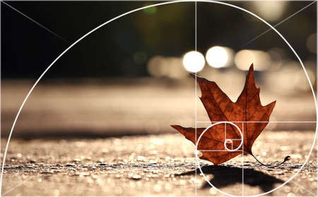 Illustration of spiral arrangement in nature. Fibonacci pattern Stock Photo