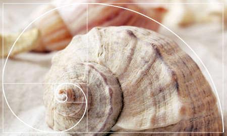 fibonacci: Illustration of golden ratio in nature. Fibonacci pattern Stock Photo