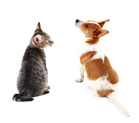 snění: Cat and dog together, view from the back, isolated on white