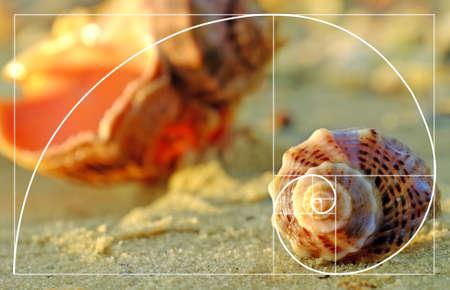 Hermosas conchas marinas en la playa, de cerca. concepto del coeficiente de oro