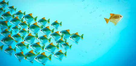 Beaucoup de poissons dans l'eau bleue. Contre le concept de flux Banque d'images - 65670928