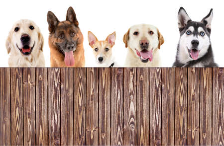Group of dogs in front of white background with wooden space for your text