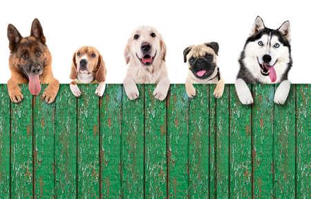 Groupe de chiens en face de fond blanc avec un espace en bois pour votre texte