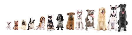 Dertien zitten honden in rij, van klein tot groot, geïsoleerd op wit