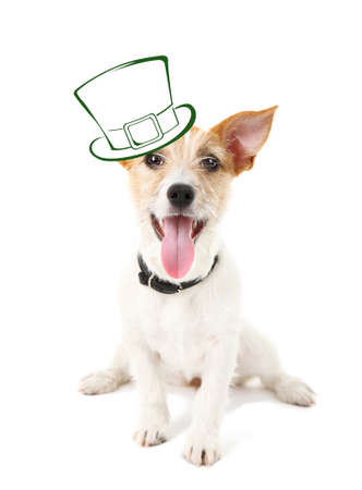 animal st  patricks day: Funny happy dog with St. Patricks Day hat, isolated on white