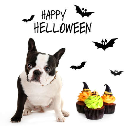 funny costume: Cute dog wearing funny costume for Halloween, isolated on white Stock Photo
