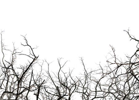 leafless: Leafless tree branches, isolated on white