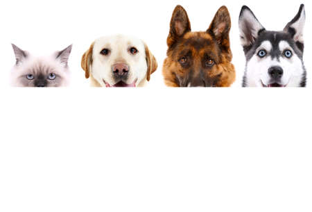 Group of dogs and cat in front of white background with space for your text