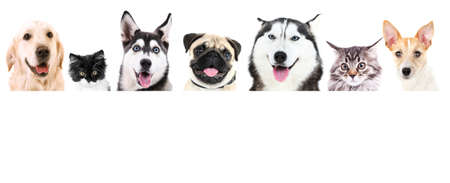Group of dogs and cats in front of white background with space for your text