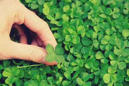 Female hand holding clover leaf, closeup 스톡 콘텐츠