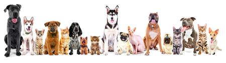 Grupo de perros y gatos que se sientan, aislado en blanco Foto de archivo