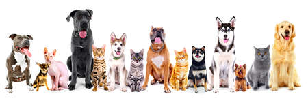 Gruppo di gatti seduti e cani, isolato su bianco