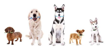 Leuke honden met tandenborstels, geïsoleerd op wit Stockfoto