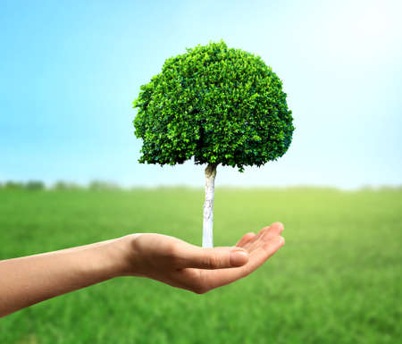 Female hand holding green tree on natural background