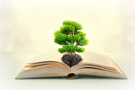 Book with green tree on abstract background Stock Photo