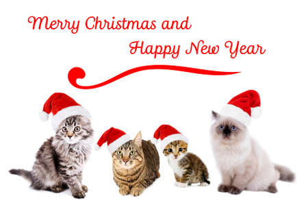 Funny christmas cats. Merry Christmas and Happy News Year