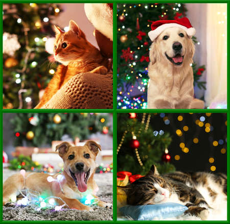 perros graciosos: Funny cats and dogs with santa hats