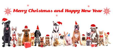 Grappige kerst huisdieren. Vrolijk kerstfeest en een gelukkig nieuwjaar