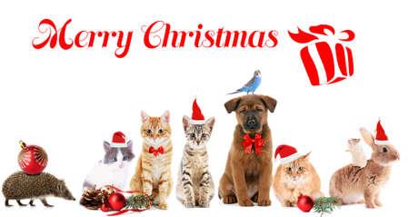 Funny christmas pets. Merry Christmas Stock Photo