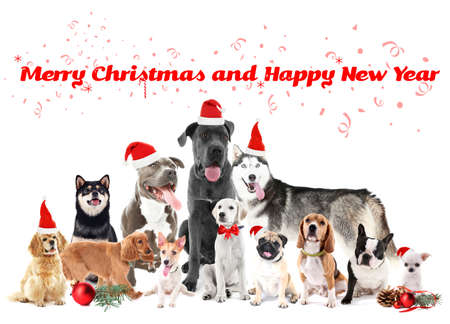 funny christmas dogs merry christmas and happy news year stock photo 69893724