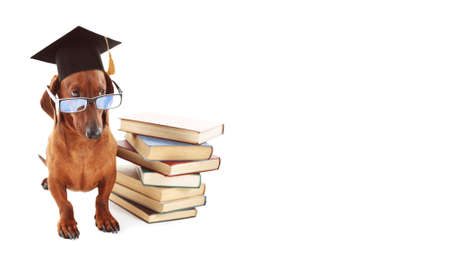 Adorable dog with black graduation cap, glasses and books on white background.