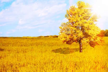 Big lonely tree in rye field. Beautiful autumn landscape. Stock Photo