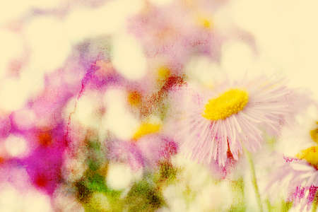 aster: Beautiful flowers. Watercolor background. Stock Photo