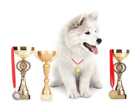 Vriendelijke Samoyed hond met trofee kopjes en medailles geïsoleerd op wit Stockfoto