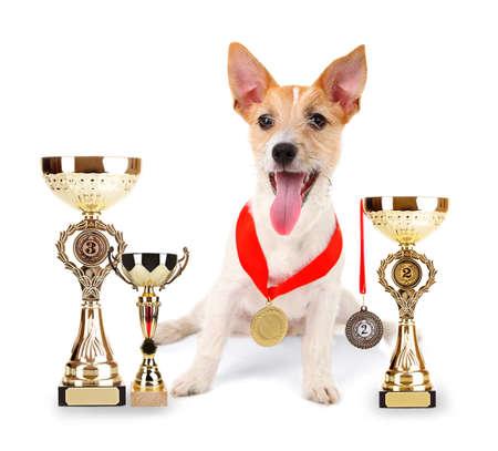 재미 있은 작은 강아지 잭 러셀 테리어 트로피 컵 및 화이트 절연 메달 스톡 콘텐츠