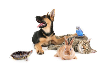 Group of pets on white background. Animals friendship. Stock Photo