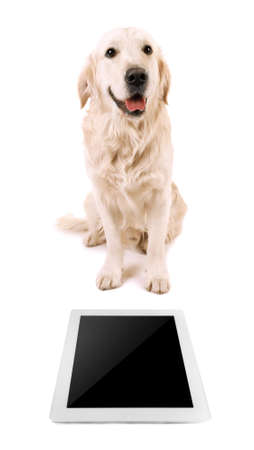 Adorable Labrador sitting with tablet, isolated on white Stock Photo
