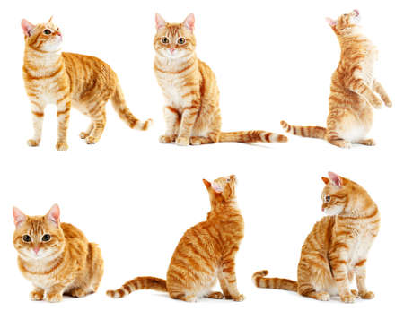 Red cat collection isolated on white Stock Photo