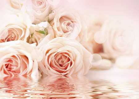 reflection: Floral background. Water reflection of beautiful flowers. Stock Photo