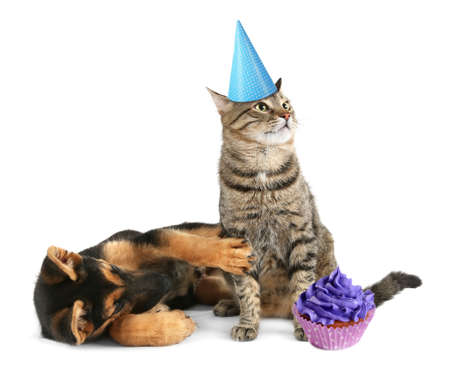 Cute dog and cat in party hat with delicious cupcake isolated on white