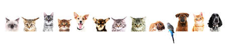 Row of different pets on white background. Stock Photo