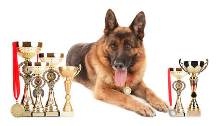 Funny cute dog with trophy cups and medals isolated on white